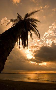 Free Tropical Sunset Stock Photos - 8540303
