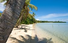 Free Tropical Beach And Palm Tree Royalty Free Stock Image - 8540736