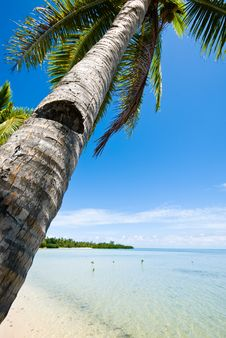 Free Tropical Beach And Palm Tree Stock Image - 8540761