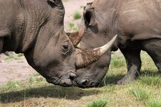 Free White Rhinoceros Stock Photo - 8540900