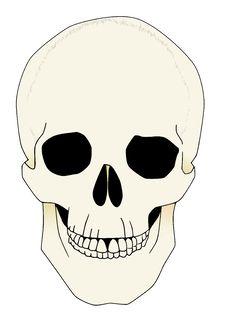 Free Skull Anatomical Illustration Royalty Free Stock Photos - 8541288