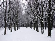 Free Winter Forest Stock Image - 8541691