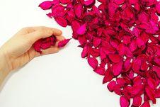 Free Petals Royalty Free Stock Photo - 8541705