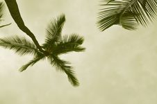 Free Sepia Palm Royalty Free Stock Photos - 8542338