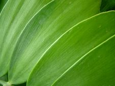 Free Green Leaf Pattern Royalty Free Stock Photography - 8543907