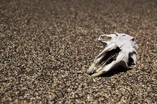 Dead Rodent Stock Images