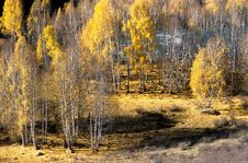 Free China/Xinjiang: Fall Color Of Riverside Royalty Free Stock Photos - 8544108