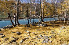 China/Xinjiang: Fallen Leaves In Autumn Royalty Free Stock Photos