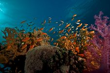 Free Coral And Fish Royalty Free Stock Image - 8545106