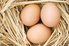 Free Eggs Royalty Free Stock Photos - 8546298