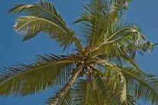 Free Palm Tree Royalty Free Stock Photos - 8547068