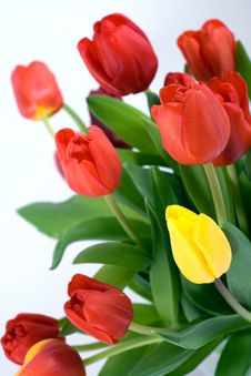Free Tulips Bouquet Stock Photo - 8548300