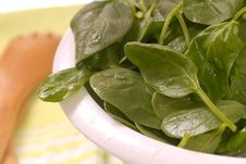 Free Washed Spinach Stock Images - 8548374