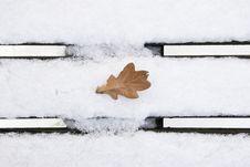 Oak Leaf In Wintertime Royalty Free Stock Image