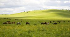 Horses And Grassland Royalty Free Stock Image