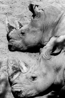 Free Rhinoceros Taking A Rest Stock Photo - 85404540