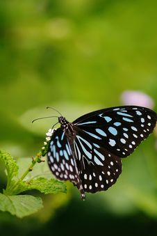 Free Close-up Of Butterfly Royalty Free Stock Images - 85405129