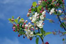Free White Flowers On Black Tree Branch Under Sky During Daytime Stock Images - 85405164