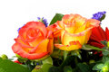 Free Bouquet  Of Roses And Gerber Royalty Free Stock Images - 8554419