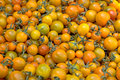 Free Farmer S Market Cherry Tomatoes Royalty Free Stock Photos - 8554958