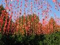 Free Rose Petal Royalty Free Stock Images - 8555899