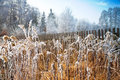 Free Frozen Field Stock Photography - 8558362