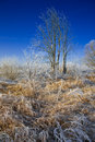 Free Frozen Field Stock Photography - 8558382