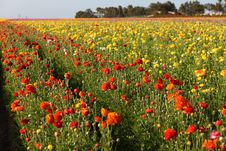 Free Flower Field Stock Photos - 8550713