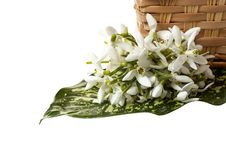 Free Snowdrop And Green Leaf Near Basket . Stock Photography - 8551492