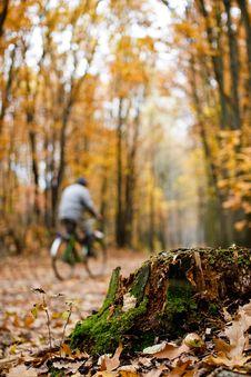 Free Autumn Forest Royalty Free Stock Photos - 8552048