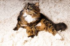Free Shocked Cat Stock Photos - 8552313