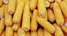 Free Corn Stock Image - 8552551