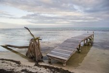 Fallen Palm And Pier At Sunset Stock Photography