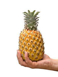 Free Presenting Ripe Pineapple Stock Photo - 8555860