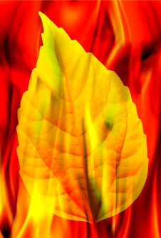 Free Leaf And Fire Stock Photo - 8556070