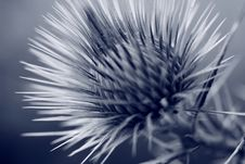 Free Grey Thistle Bur Stock Photos - 8556883