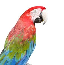 Free Macaw Royalty Free Stock Photos - 8557558
