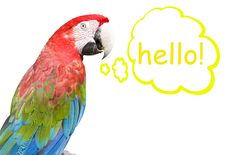 Free Macaw Stock Images - 8557584