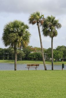Three Palms And A Bench Stock Photos