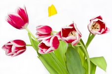 Bouquet From Beautiful Tulips Stock Image