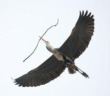 Free Heron Stock Image - 8559301