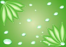 Free Leaves With Water Drops. Vector. Stock Photography - 8562272