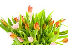 Free Bouquet Of Tulips Isolated On White Royalty Free Stock Image - 8562806