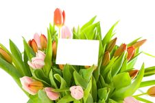 Free Tulips And A Card Isolated On White Background Royalty Free Stock Photography - 8562827