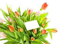 Free Tulips And A Card Isolated On White Background Stock Image - 8562871