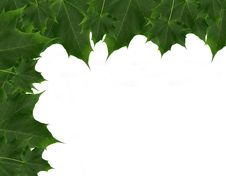 Free Maple Leaves Royalty Free Stock Photo - 8563475