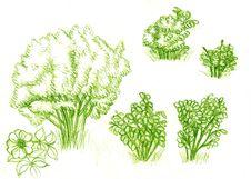 Free Green Bush Stock Image - 8564741