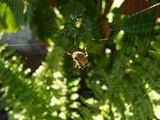 Free Garden Spider Stock Image - 8565131