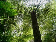 Free Hinterland Tree Fern Stock Images - 8565434