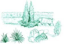 Free Coniferous Bush Stock Image - 8565611